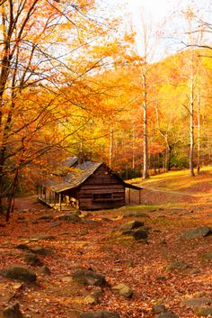 Watching the vast greenery surrounding your house light up with fall colors is one of the best parts of spending the season in the country.