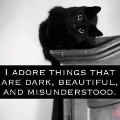 The High Priestess - Cutest Baby Animals Crazy Cat Lady, Crazy Cats, Funny Animal Memes, Funny Animals, Black Cat Quotes, Black Cat Aesthetic, Goth Quotes, Curious Cat, Cute Baby Animals