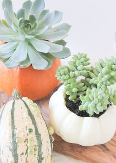 pumpkin vase with succulents