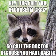 "(crazy,rabies,raccoon,funny) sing the words with the song ""so here's my number, call me maybe)"
