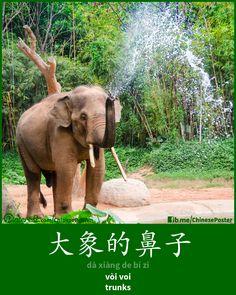 象的鼻子 - xiàng de bí zi - vòi voi - trunk