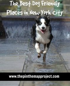 The Best Dog Friendly Places in New York City
