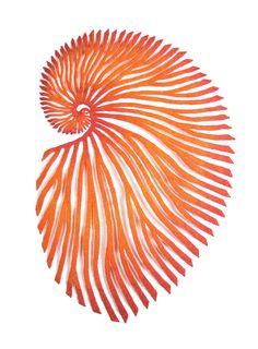 Orange-paper-nautilus-web.jpg