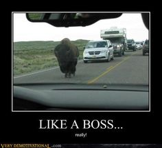 Demotivational Posters, Just Give Up, Like A Boss, Really Funny, Crying, Lol, Humor, Feelings, Work Harder