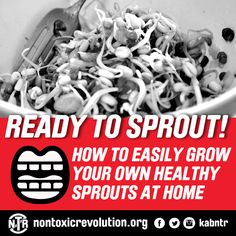 How To Easily Grow Your Own Healthy Sprouts At Home #DIY Eating Well, Clean Eating, We Energies, Your Mouth, What You Eat, Grow Your Own, Our Body, Sprouts, Healthy Life