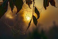 Foggy morning. by Waldemar Sadłowski
