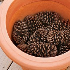 How to Plant Bulbs in a Container: Step One - Planting Bulbs in Containers - Southern Living Garden Bulbs, Planting Bulbs, Garden Soil, Garden Planters, Planting Flowers, Flower Gardening, Container Plants, Container Gardening, Gardening Tips
