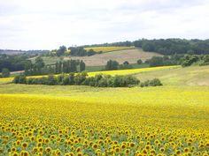 Gîtes de France Charente : Paysage du Sud Charente
