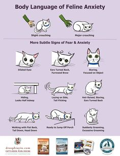Body Language of Feline Anxiety Poster (Handouts) – Dr. Sophia Yin