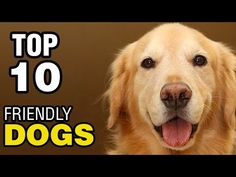Top 10 friendly dogs – About Dogs