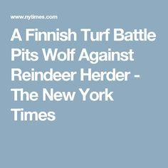 A Finnish Turf Battle Pits Wolf Against Reindeer Herder - The New York Times