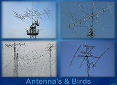 Antenas e pássaros (Birds) - http://www.facebook.com/photo.php?fbid=10200264333762755=a.2089545489980.2112035.1585514306=1_count=1=nf - 269361_10200264333762755_1389541127_n.jpg (800×586)