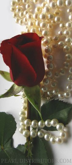 red rose with ivory pearls
