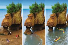"Been there:  The Hopewell Rocks (""Flowerpot Rocks""), Bay of Fundy, New Brunswick, Canada. The tide drops 30' twice a day and you can walk on the ocean floor ... beware the fast-returning tide though!"