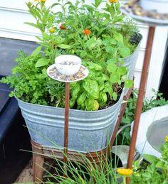 eine Zinkwanne mit Kräutern bepflanzen