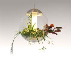 Glaspendel med levende planter. Flot og anderledes lamper som vil gøre sig perfekt i et lidt kedeligt hjørne som trænger til liv.