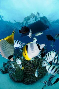 Ocean life | under the sea |   | oceanlife | | amazing nature |  #oceanlife #amazingnature  https://biopop.com/