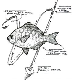 surf fishing rig diagrams