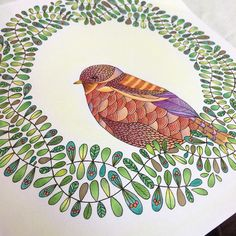 From Animal Kingdom by Millie Marotta - colored pencils and micron pen