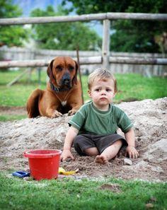 Os animais também têm sentimentos e é bom que você saiba identificar o estado de ânimo do seu cachorro. #animais #cachorro