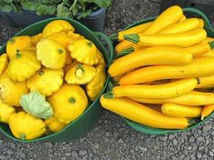 How To Freeze Squash From Your Garden