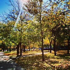 Fall morning :) #fall #sun #autumn #love #beautiful #sunny #leaves #sunup #snapshot #trees #nature #today #byme #landscape #follow4follow #followforfollowback #followmeplease