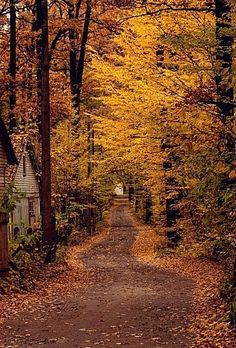 Country road covered with beautiful fall foliage. Autumn Nature, Autumn Leaves, Autumn Forest, Autumn Rain, Late Autumn, Golden Leaves, Forest Scenery, Forest Landscape, Fall Landscape
