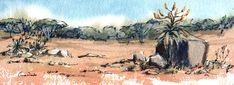 Aloes in Winter Watercolours, Watercolor Paintings, Wildlife, African, Birds, Winter, Winter Time, Water Colors, Bird