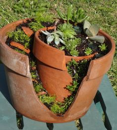 Succulent Garden  I made out of broken clay pots, moss, cacti & potting soil