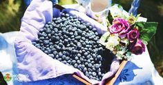 8 Easy Ways to Preserve Your Blueberry Harvest and Make It Last