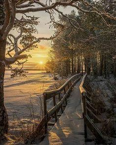 """@travelnaturephotos on Instagram: """"Landön, Sweden. Source: @theplanetsfervor"""