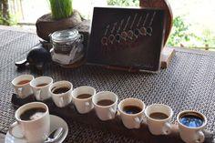 Around Ubud: Tegalalang Rice Terraces #Gotripit #travelblog #Bali #Ubud # Tegalalang #Riceterraces #Ricefield #Coffeeplantation #Coffee #Luwak