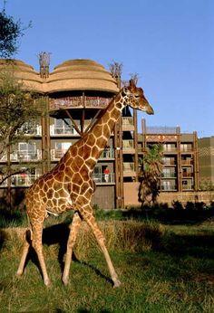 Disneys Animal Kingdom Lodge, Bay Lakes, FL.