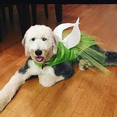 Fairy dog costume Tinkerbell dog costume by FashionFurPaws on Etsy Small Dog Costumes, Cute Dog Costumes, Dog Halloween Costumes, Costume Ideas, Unicorn Dog Costume, Little Dogs, Tinkerbell, Dog Christmas Gifts, Pets
