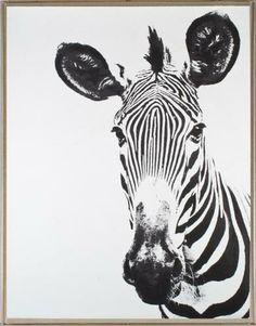 Tylinek Zebra