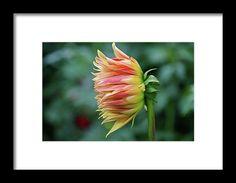 dahlia, orange, flower, nature, bloom, interior design, michiale, schneider, photography