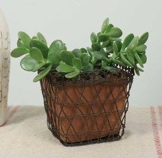 Small Wire Basket with Terra Cotta Clay Pot