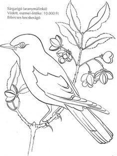 coloring 6 birds from nature paint Bird Drawings, Colorful Drawings, Animal Drawings, Bird Embroidery, Hand Embroidery Patterns, Bird Coloring Pages, Coloring Books, Learn To Sketch, Bird Template