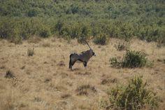 Ladybrand South Africa