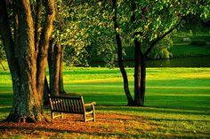 Gratis foto: Meadowlark, Park, Bank, Natuur - Gratis afbeelding op ...