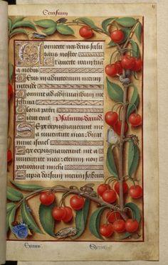 """Jean Bourdichon, """"Cherry"""", from the Grandes Heures d' Anne de Bretagne, c.1503-08 (source)."""