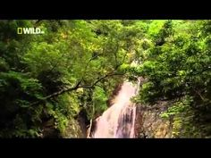 Wild Japan   National Geographic Nature Documentary)