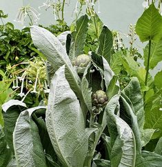 Cardoon plants are regal and svelte, with silver leaves and giant midribs. Before they set buds (which look just like artichoke; they are very closely related), their main appeal is their sculptural foliage. Garden Spaces, Garden Beds, Garden Plants, Edible Plants, Edible Garden, Chelsea Flower Show, Thistle Flower, Planting Plan, Foliage Plants