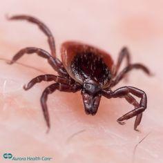 medel mot mygg