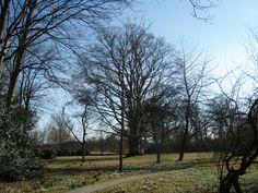 niebert | de rode beuk in de tuin van het iwema steenhuis is met een omtrek van 645cm de dikste boom van de provincie groningen | vermoedelijk gaat het hier om een boomboeket: een bundel van drie stammen die met elkaar zijn vergroeid | plantjaar: 1810-1820 (of ±1765)