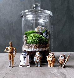 SALE Star Wars R2-D2 C-3Po Ewok Terrarium  Live by DoodleBirdie