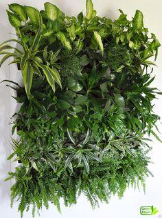 #вертикальное_озеленение #живая_зелень