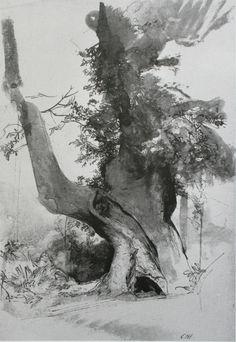 Tree, by Pietro Annigoni (1910—88)