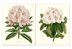 Azalea 1865 II Diptych