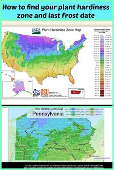 How to find your plant hardiness zone and last frost date for starting your garden.